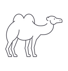 camel line icon sign on vector image vector image