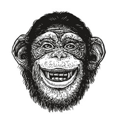 Hand drawn portrait of chimpanzee funny monkey vector