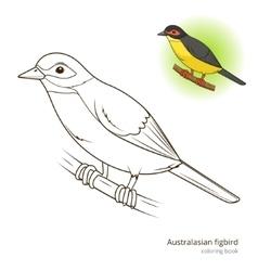 Australasian figbird bird coloring book vector