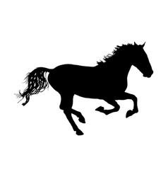 Elegant horse in gallop silhouette sport race vector