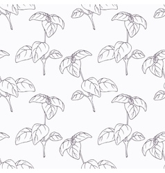 Hand drawn basil branch outline seamless pattern vector image