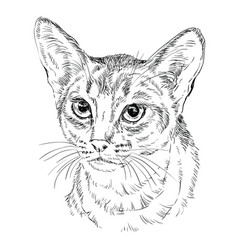 Monochrome abyssinian cat vector