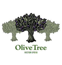 olive tree extra virgin olive oil symbol symbol vector image