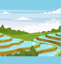 rice plantation flat vietnam vector image