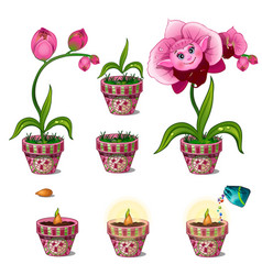 stages of growth of magical pink flower with face vector image