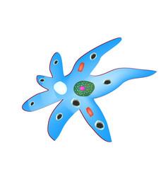Structure amoeba is intestinal vector