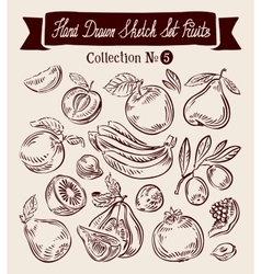 Hand drawn sketch collection fruit vector image vector image