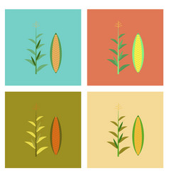 Assembly flat zea mays vector