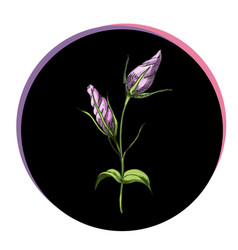 Beautiful eustoma bud flower in a black circle vector