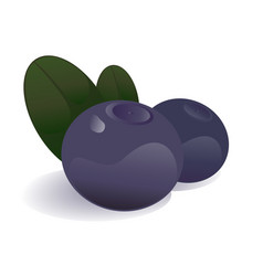 blueberry isolated vector image