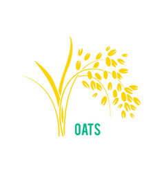 oats cereals grain vector image