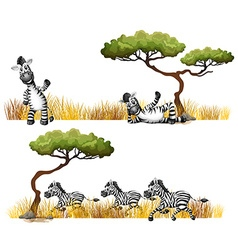 Zebras resting in the field vector image vector image