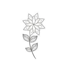 star anice flower decoration line vector image