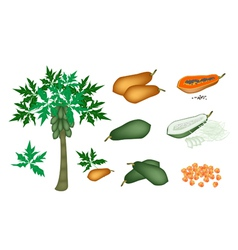 A Set of Fresh Papayas and Papaya Tree vector image vector image