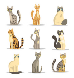 Collection of different cats breeds cute pet vector