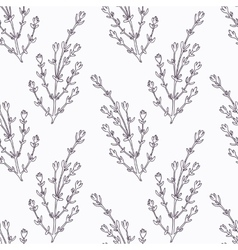 Hand drawn thyme branch outline seamless pattern vector