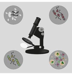 Microscope bacteria and viruses vector