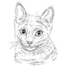 Russian blue cat vector