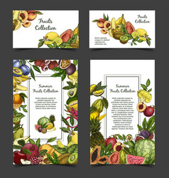 Banner or brochure with exotic tropical fruits vector