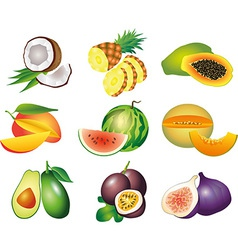 fruits exotic set vector image vector image