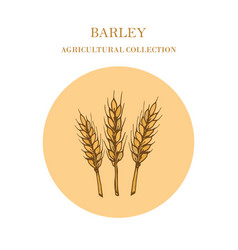 Agricultural collection barley vector
