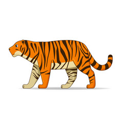 Amur tiger animal standing on a white background vector