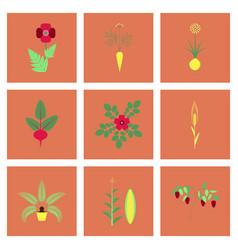 Assembly flat flower papaver daucus carota allium vector