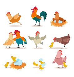 Cartoon chicken chick with eggs hen and rooster vector