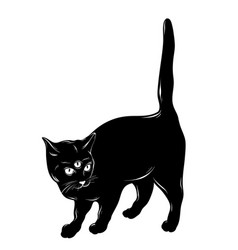 hand drawn cat with three eyes vector image