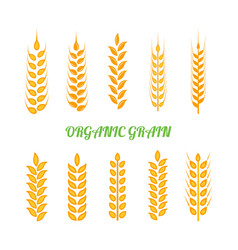 set of simple wheats ears icons and wheat design vector image