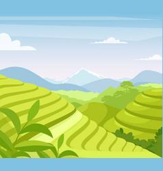tea plantation flat asia vector image
