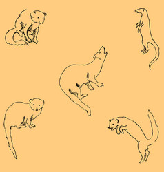 mongoose sketch by hand pencil drawing by hand vector image vector image