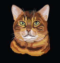 Colored bengal cat vector