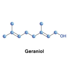geraniol is a monoterpenoid and an alcohol vector image