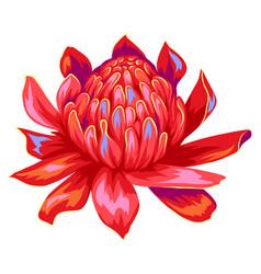 Tropical etlingera flower vector