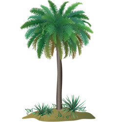 Palm tree and plants vector image