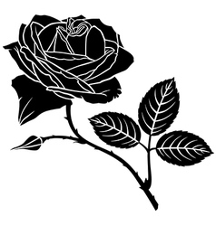 rose bud vector image vector image