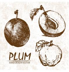 digital detailed plum hand drawn vector image vector image