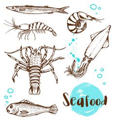 hand drawn fish squid and shrimp vector image vector image