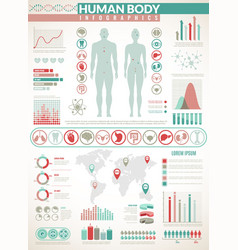 body infographics human health medical vector image