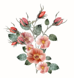 botanical with wild pink rose vector image