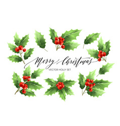 christmas holly branches realistic vector image