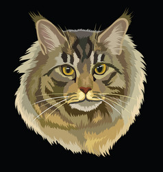Colored maine coon cat vector