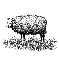 sketch of a sheep hand drawn vector image