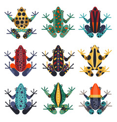 Tropical poison dart frogs set in flat vector