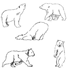the bears sketch by hand pencil drawing by hand vector image vector image