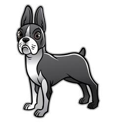 cute boston terrier dog vector image