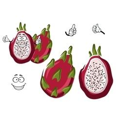 Ripe exotic pitaya or dragon fruit character vector