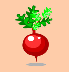 beetroot cartoon style vector image