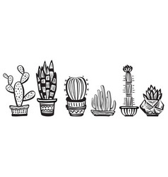 cactuses vector image